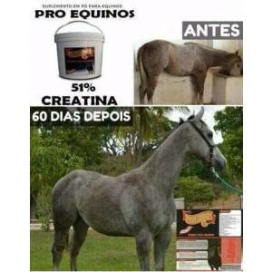 Pro-equinos E -Agrocave- 2,5 Kg -Mineral para Cavalos Com 51% Creatina.